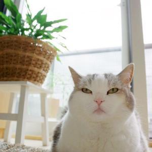 変化する猫の寝場所