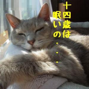 眠れる乙女♪