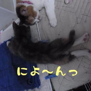 でき・・・た・・・?の!?(;゚Д゚)