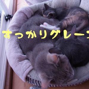 ふっくらベッド!?