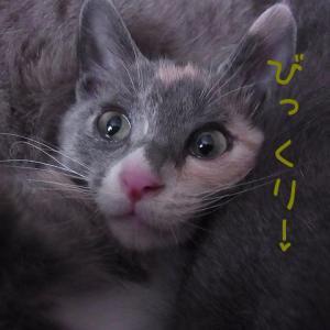 表情豊か~♪