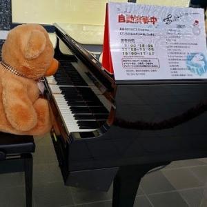 クマちゃんのピアニスト登場