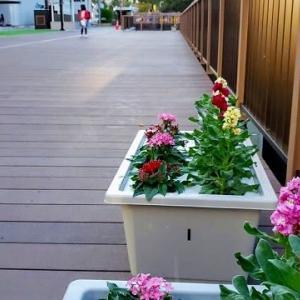外堀(三ノ丸堀)のデッキ設置工事がやっと完成