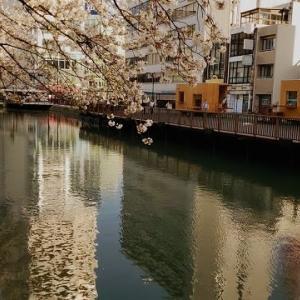 水辺のデッキ「駿府ホリノテラス」が完成