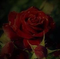 三島忌や絹の造花のうすぼこり