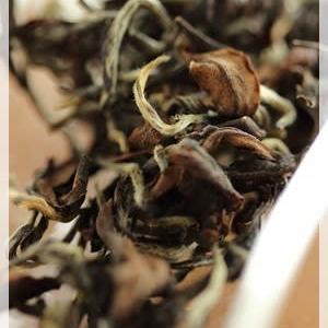 定石野茶 定美