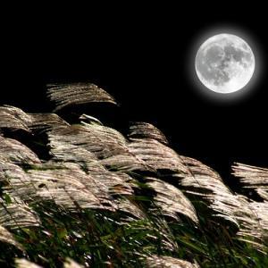 いざよいながら、月が綺麗ですねと囁こう