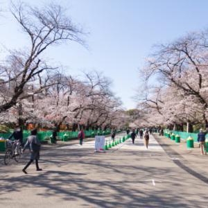 桜 2021-1