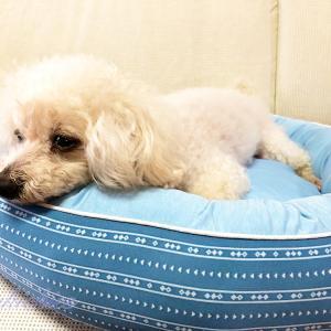 ニトリのクール犬猫ベッドの寝心地は?