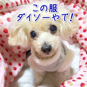 【2020年】100円ショップ、ダイソーの犬グッズが充実!