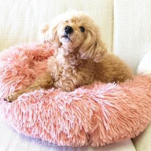 冬の暖かふわふわもこもこ犬ベッド買ったよ!【寝心地とレビュー】
