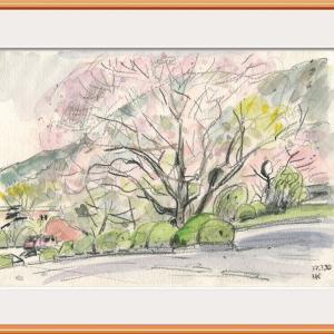 県立農大の桜