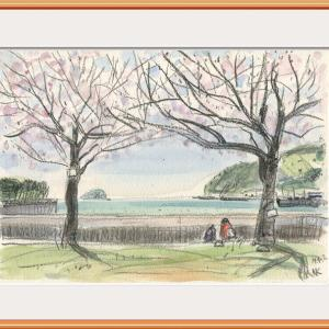 向島運動公園・桜