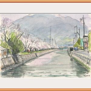 浜方入川の桜