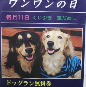 9月11日(金)ドッグラン大仙の様子(^^)