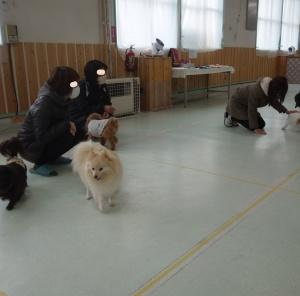 11月23日(月)ドッグラン大仙の様子(^^)