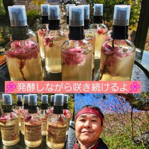 最近の酵母水®ブログは海外に向けて書いています。