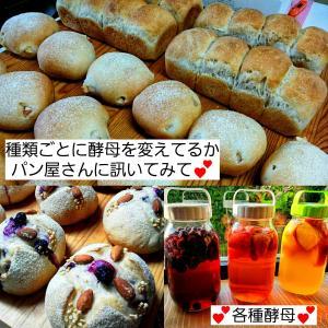 酵母が同じだと形が違ってもどのパンも同じ味、色々なパン酵母(パン種)作り、など