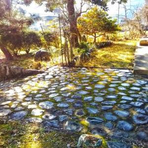 これが僕のマイ苔だよ圧倒的な【苔庭】が酵母水・広島工房