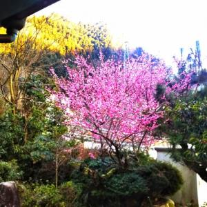 聖地・広島工房で梅の花の酵母水作りお得に旅する【㊙裏ワザ㊙】も伝授