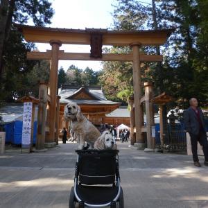 犬(ペット)とお参りできる穂高神社