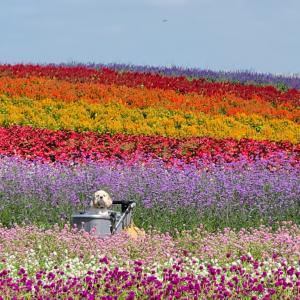 花の虹 秋のやくらいガーデン