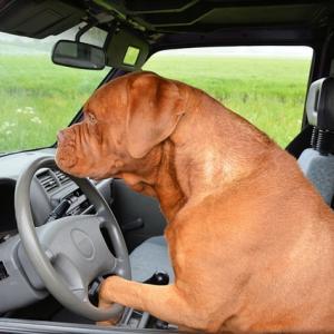 車を運転する全ての人へ★バックするときは慎重に!!