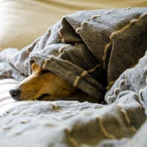 休めるときは、ゆっくり休む!
