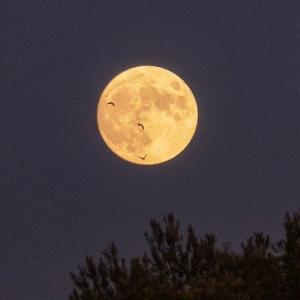 8年ぶりの満月&中秋の名月。見られるかな?