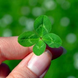 運が良いと思えば、良いことばかりが起こる!?