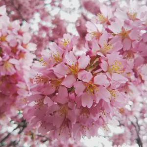 感じた春のエネルギーをあなたに満たして☆成長と豊かさを導く女神オスタラのサポート