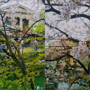 柔らかな新緑と桜の薄墨に罪悪感を手放したところからの自尊心によるしなやかで力強い女性性を感じて☆