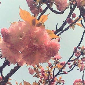 バラバラだったヒトへの愛と自分への愛を統合する☆春の女神コーデリアからの香り水