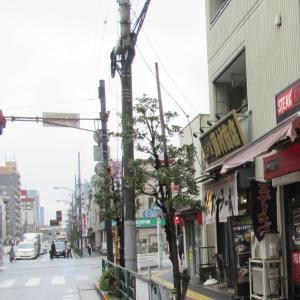 たまに青森下北ラーメンが食べたくなります!上野に有った店は消えているが住吉は健在!