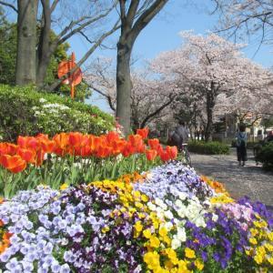咲いた♪咲いた♪チューリップの花が♪並んだ♪並んだ♪赤・白・黄色、どの花見て綺麗だね。