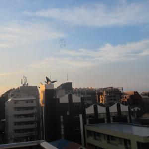 くじらの学校で有名な東京スポーツレクレーション専門学校!自宅近く!屋上から1階に降りて来たよ。