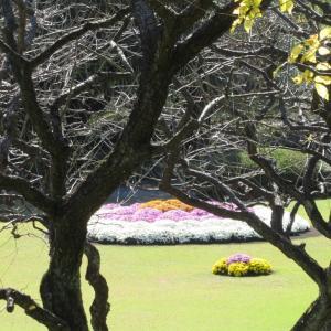 菊の祭典が始まりましたが!まだ早いですね!今週、通りすがりに見た菊を掲載いたします。