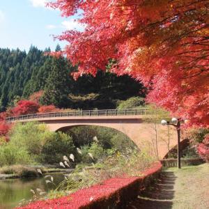四方を国有林の大木に覆われ、秋(紅葉)の湖面は何処までも映えます!