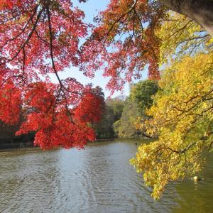 ボートに乗るカップルは分かれると言う都市伝説がある公園にやってきました。