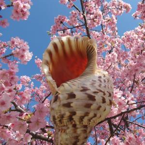 法螺貝、2月中にFBやTWで掲載したのをまとめてブログアップ致します。