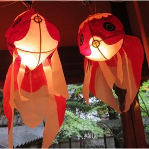和の灯り!柳井金魚ちょうちん祭り、一匹の黒い(ブラック)金魚が気になりました!