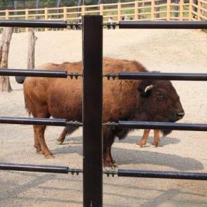 東山動物園・ビミョ~な写真たち