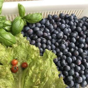 朝どりマイクロトマト&ブルーベリー