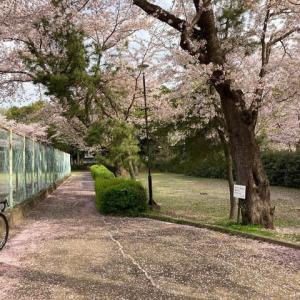 つくば 桜 2021年