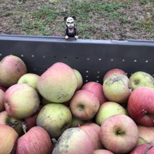 落ちたリンゴをお願いします
