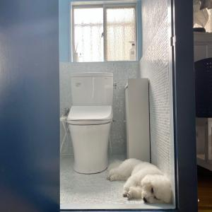 トイレ掃除は、抜かりなく…