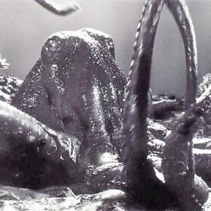 ウルトラ怪獣第24号:ウルトラQ~大ダコ スダール