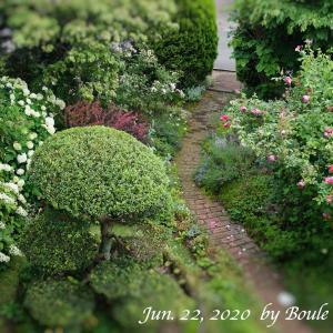 6月下旬の庭風景