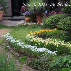 6月のカラフル庭風景