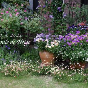 晩春〜初夏の寄せ植え風景